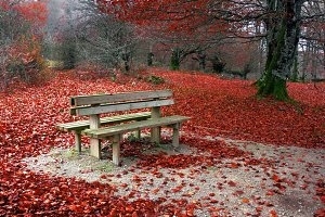 bench in autumnal park