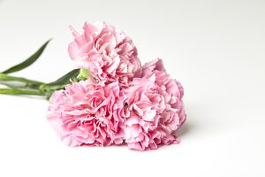 Pink carnations flower for Mother's