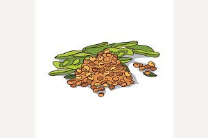 Isolated clipart Soybean