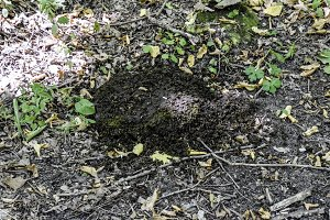 heap of cow dung on the ground in the forest.