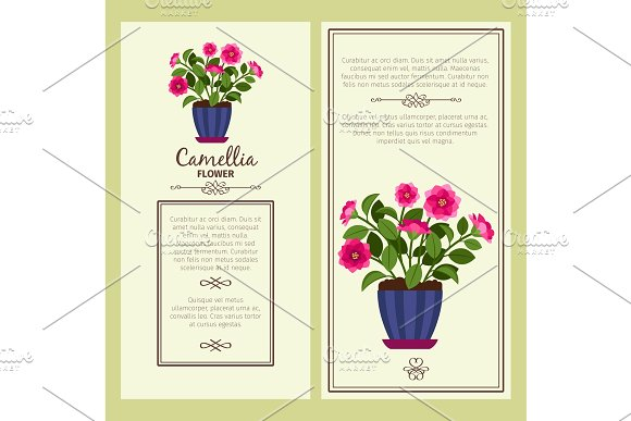 Camellia flower in pot banners