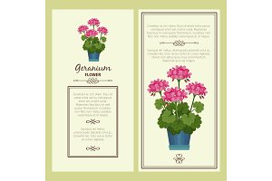 Geranium flower in pot banners
