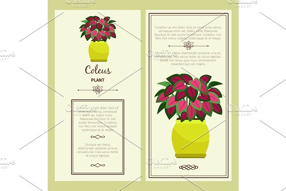 Greeting card with coleus plant