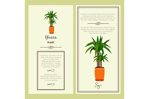 Greeting card with yucca plant