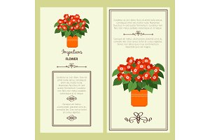 Impatiens flower in pot banners