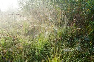 Autumn dew and cobweb