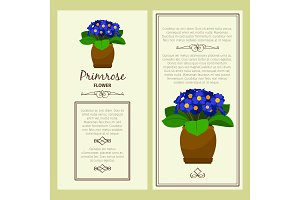 Greeting card with primrose plant