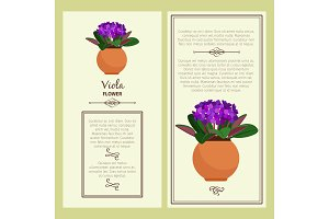 Greeting card with viola plant