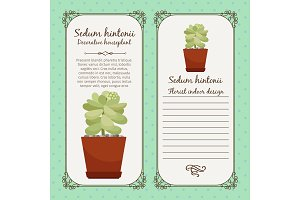 Vintage label with sedum hintonii plant