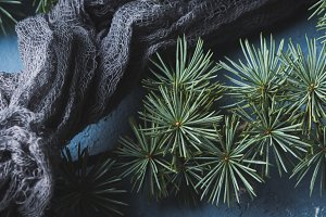 Textile and spruce branches background