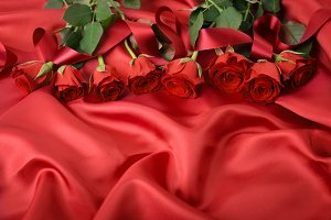 red colored blooming roses
