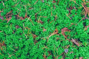 Lush moss in a forest
