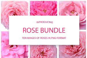 A set of clip art  - Pink Roses