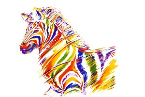 Zebra in colours