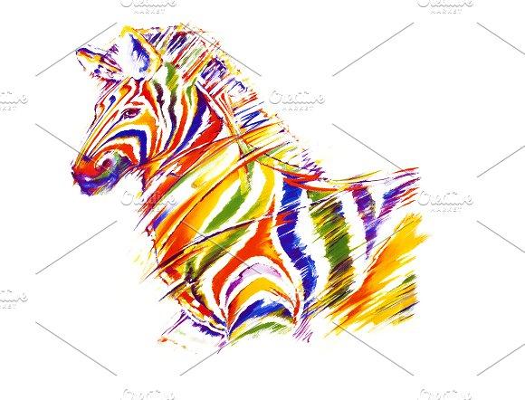 Zebra in colours