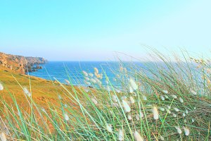Blue Sea and Grass Seed Heads