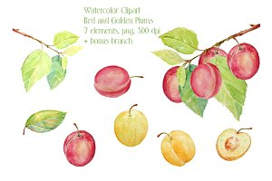 Watercolor Red and Golden Plums