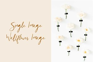 Wallflower Wedding Styled Stock