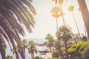 Tropical palms in Laguna Beach