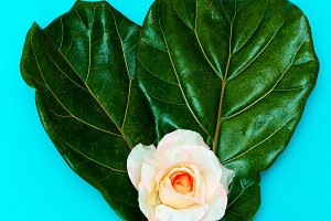 Green leaf and Rose  Minimal art des