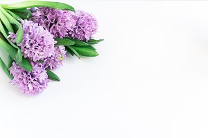 Purple Flowers Desktop Stock Photo