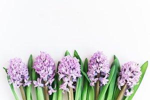 Purple Hyacinths Stock Photo