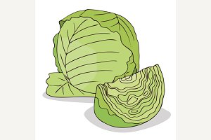 Isolate green cabbage vegetable