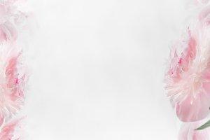 Pastel pink peonies floral frame