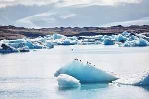 Beautiful cold landscape picture of icelandic glacier lagoon bay,