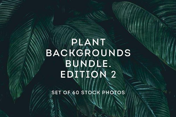 Plant backgrounds bundle 2