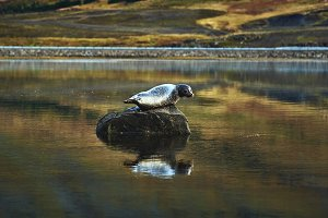 seal on the stone in the lake