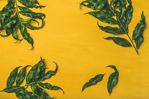 Tropical tree green leaves over bright yellow background, copy space