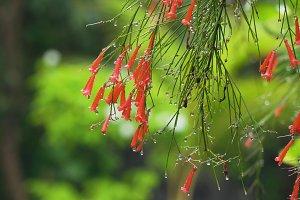 Rain drops on flower.