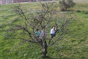 Children climbed on a tree