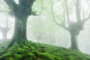 foggy forest in spring