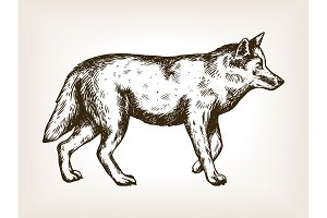 Wolf animal engraving vector illustration