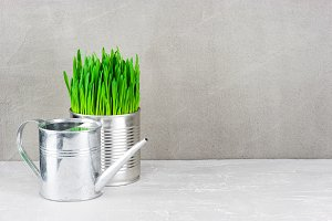 Garden grass and watering can