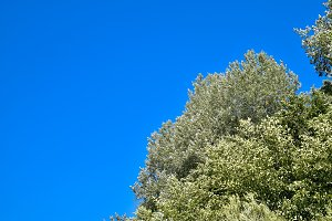 Landscape tree against the sky, blue sky and green tree.