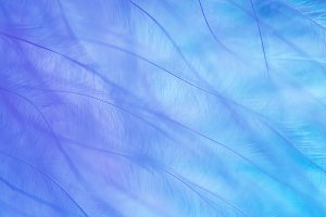 Blue abstract background of feather