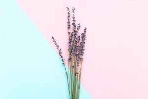 Minimalism. A bouquet of lavender