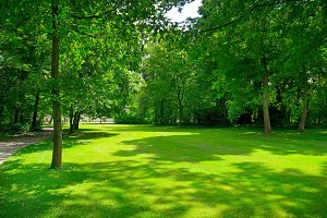 Bright meadow with green grass