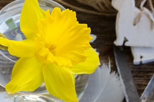 easter decorations with daffodil