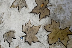 Dried leaves sculpted on the ground