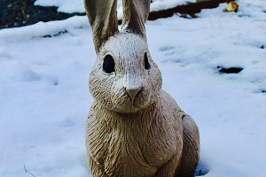 Snow Bunny, New England