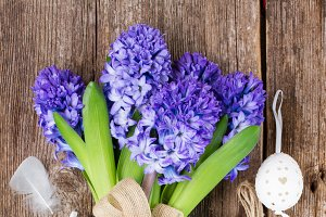Hyacinth flowers for easter