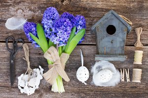 Blue hyacinth for easter