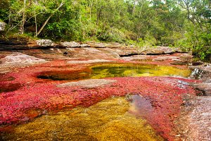 A Red and Yellow River in Colombia