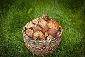 A brown round wicker basket with mus