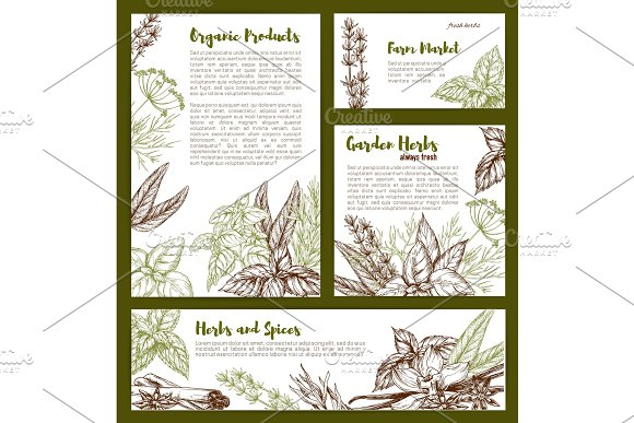 Vector organic spices and herbs seasonings sketch