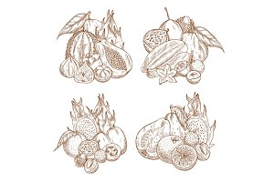 Vector sketch harvest of tropical exotic fruits